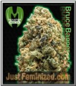 Monster Genetics Bruce Banner - Original Authorised Seed Resellers